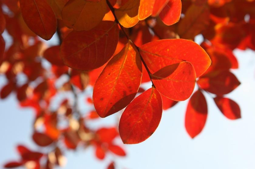 leaves-449622_1280